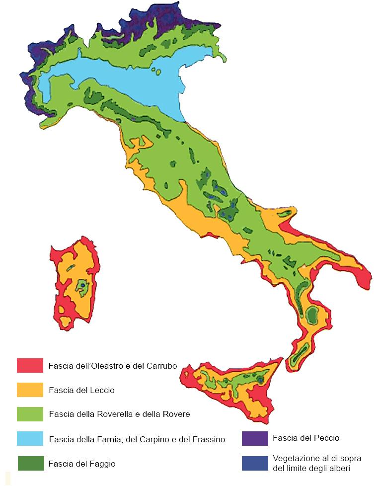 vegatazione potenziale italiana