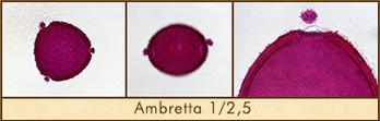 ambretta