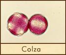 colza