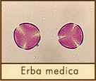 erba-medica