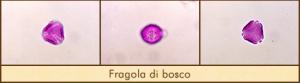 fragola-bosco