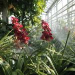 giardino tropicale1